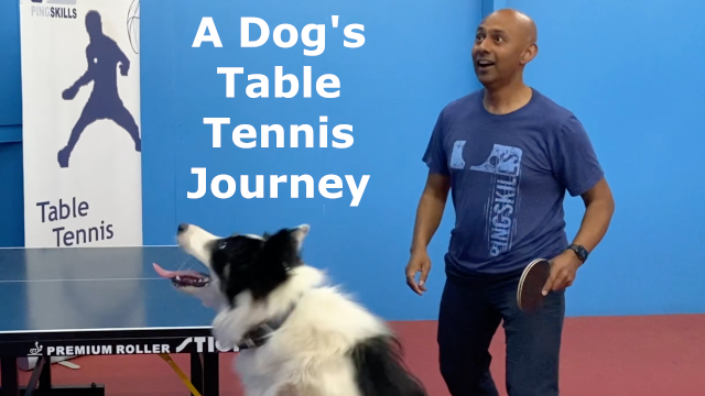 A Dog's Table Tennis Journey
